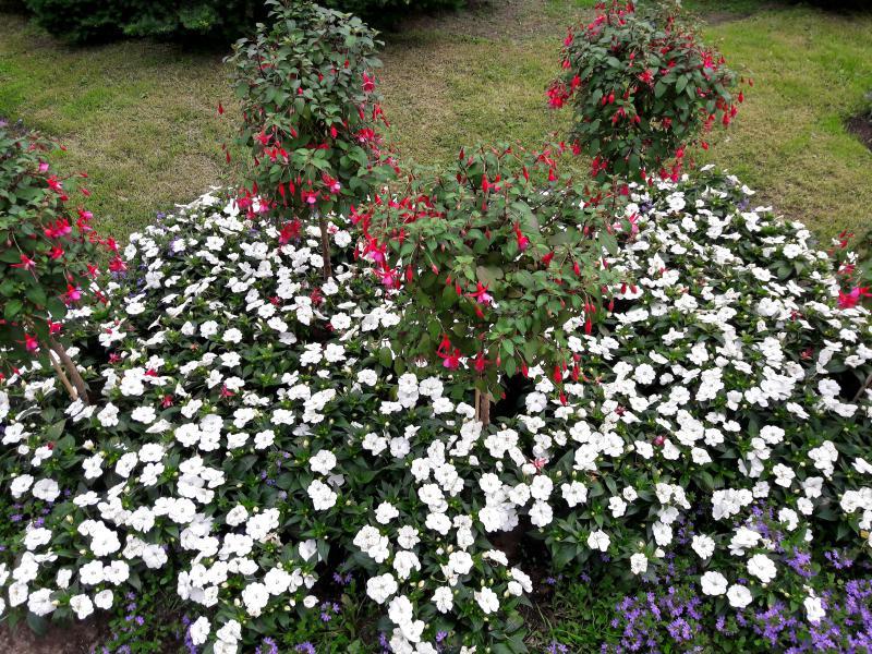 теплое время Оулу благоухает цветочными ароматами