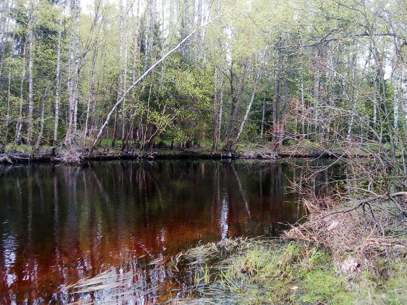 истоки Черной речки